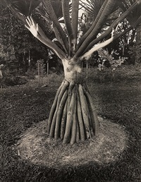 untitled (woman and tree) by jerry uelsmann