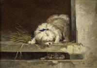 hund und katze by vincent de vos