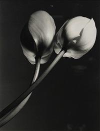 two tulips by yasuhiro ishimoto