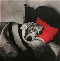 untitled (red pillow slumber) by william wegman