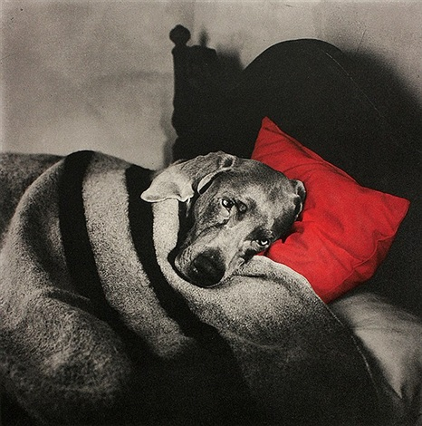 untitled red pillow slumber by william wegman