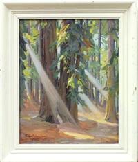sunlight streams through the redwoods by christian von schneidau