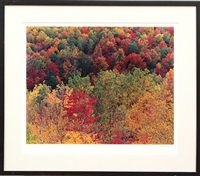 birch tree and flood plain (+ vermillion luminary; pair) by john wawrzonek
