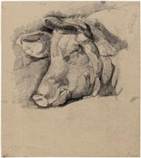 studie eines schweins, die ohren gespitzt by jörgen roed