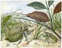studienblatt mit gespenstschrecken phasmatodea (wandelnde blätter) (+ 2 insect studies; 3 works) by josef fleischmann