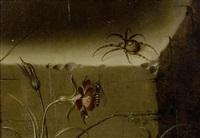 stilleben mit spinne und vespe by johann adalbert angermayer