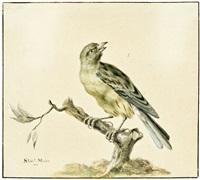 studie eines grünfinks auf einem zweig (study) by sieuwert van der meulen