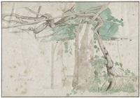 studie einer pergola mit wein in frascati by johan thomas lundbye