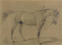 pferdestudie (study) by johann rudolf koller
