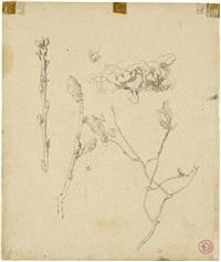 magnolienblüten und huflattich (+ porträt einer jungen frau im profil nach links, verso) by hans thoma