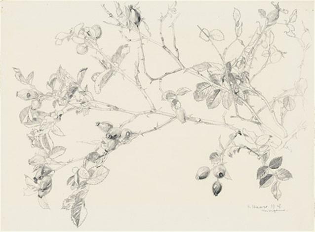 wildrosen im herbst by hermann haase