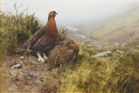 a brace of grouse on the moors by rodger mcphail