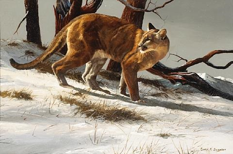 mountain lion in the snow by gary r swanson