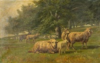 sheep grazing in a meadow by thomas corwin lindsay