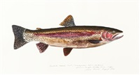 deschutes red side trout by james prosek