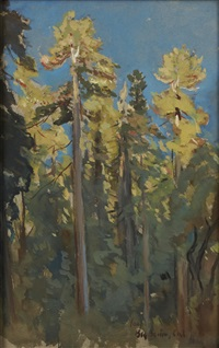 the last rays, big basin, cal by colin campbell cooper