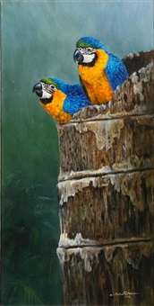 baby blue and gold macaws by gamini p. ratnavira