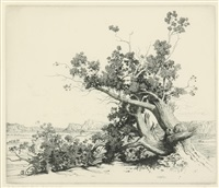 old oaks; old cedars, new mexico; land of mystery - the desert (3 works) by george elbert burr