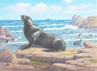 california sea lion by robert ottokar lindneux