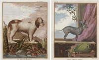 dogs (from histoire naturelle) by georges louis leclerc buffon