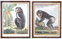 monkeys (4 works from histoire naturelle) by georges louis leclerc buffon