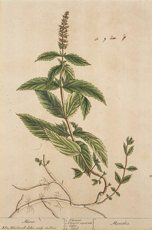 untitledfrom curious herbal 5 works by elizabeth blackwell
