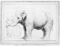 ein elephant by william (captain) baillie