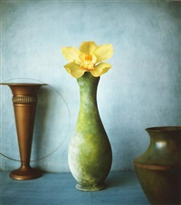 orchid by masatomo kuriya
