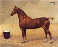 bildnis eines braunen pferdes -
