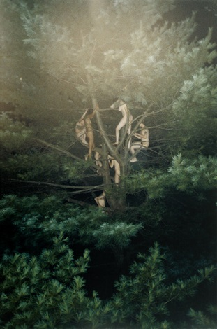 tree 3 by ryan mcginley