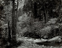 tenaya creek, dogwood rain, yosemite national park by ansel adams