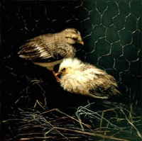 two chicks by mari kloeppel