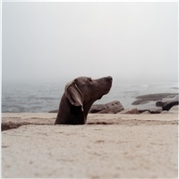 fox hole by william wegman
