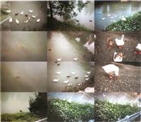 untitled (swans) by kiki smith