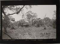 elephants in the garden of eden by peter beard