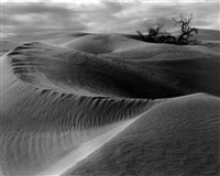 dunes by edward weston