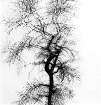 multiple exposeure tree, chicago by harry callahan
