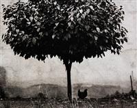 la poule et l'arbre, france by edouard boubat