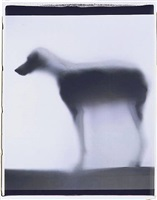 smoke and mirror by william wegman