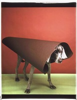 megaphone by william wegman