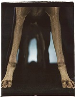 nave by william wegman