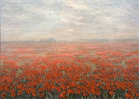 field of poppies by nur goksu