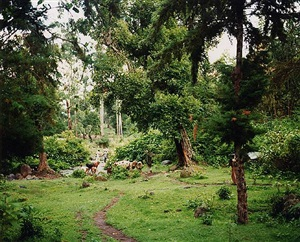 ethiopian landscape iii by richard billingham