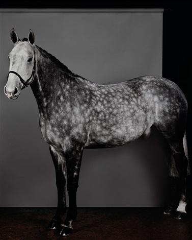 horse dapple grey i by sarah jones on artnet