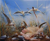 seagulls (from the museum of nature – new paradise series) by oleg kulik