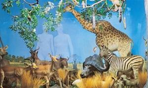 giraffe (from the museum of nature – new paradise series) by oleg kulik