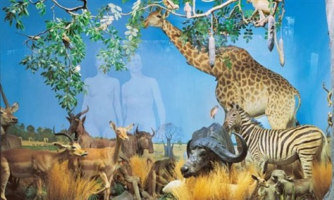 giraffe (from the museum of nature – new paradise series) by oleg kulik