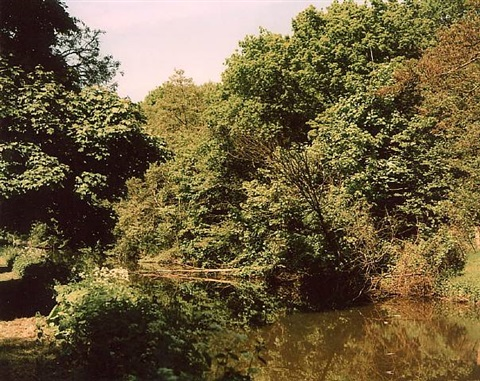 trees by richard billingham