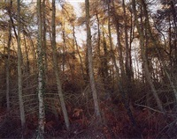 trees ii by richard billingham