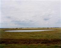 untitled, norfolk (pond) by richard billingham